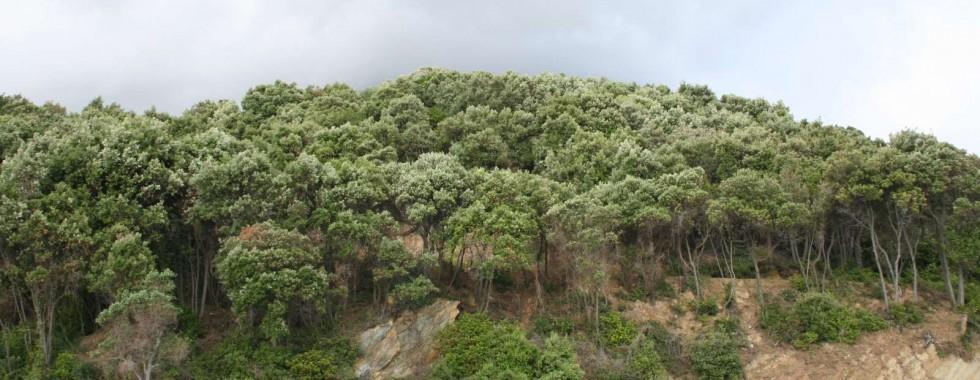 Δάσος αριάς στο Άγιο Όρος - Τύπος οικοτόπου 9340