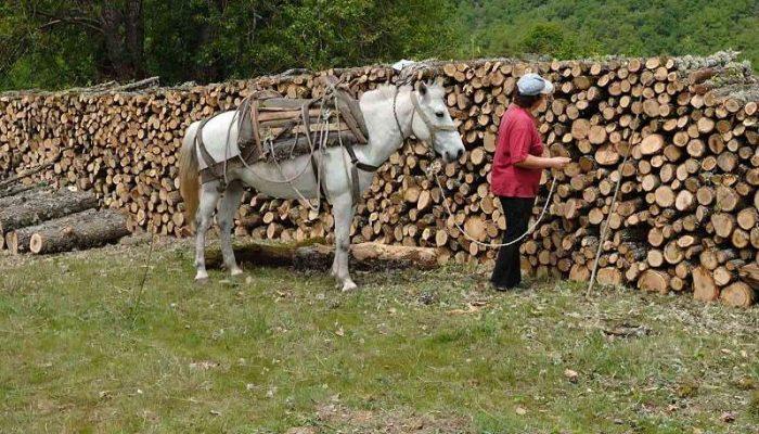 Μεταφορά ξυλείας στη Ροδόπη