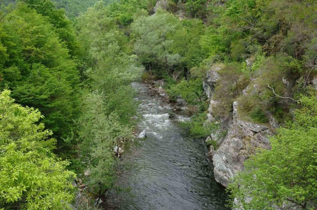 Τύπος οικοτόπου 92Α0 Δάση – στοές με Salix alba και Populus alba