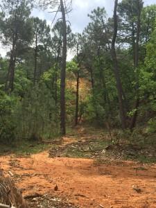 Χαρακτηριστικό τοπίο στην περιοχή Ochre όπου σε εγκατελειμένα ορύγματα ώχρας εγκαταστάθηκε μεικτό δάσος δασικής πεύκης και χνοώδους δρυός.