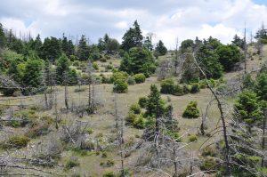 Πάρνωνας, μετά το τέλος των δασικών πυρκαγιών του 2007
