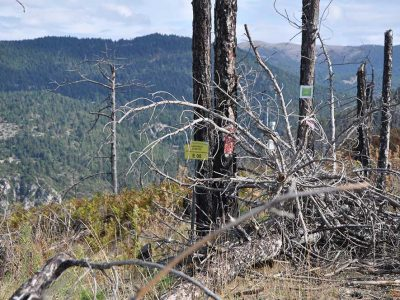 A restoration monitoring area of Parnon, on 2012.