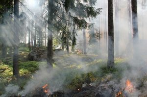 Workshop on forest fire research